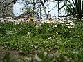 Flora vo Polog lete (10).JPG
