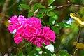 FloresChapada2.jpg