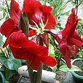 Flores Vermelhas.jpg
