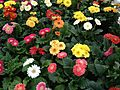 Flower Mix.jpg