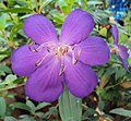 Flowers - Uncategorised Garden plants 222.JPG