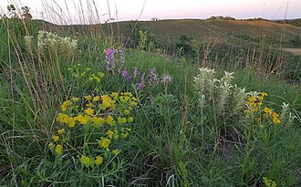 Loess Hills - Wildflowers in the Loess Hills