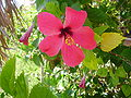 Flowers of Cuba 10.JPG