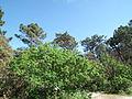 Forêt de Suzac (5).JPG