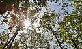 Forest Envelope.jpg