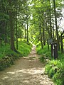 Forest Path - geograph.org.uk - 414801.jpg