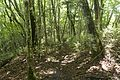 Forest in Doshi 02.jpg