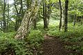 Forest in Doshi 13.jpg