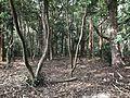 Forest in Miyazaki Shrine.jpg