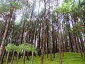 Forest near CHANGU NARAYAN Temple, Nepal.jpg
