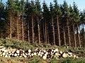 Forestry work, Auldton Fell - geograph.org.uk - 385979.jpg