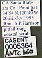 Formica fusca casent0005364 label 1.jpg