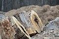 Fort Indiantown Gap begins firewood and wood chip sales 141204-Z-TN694-001.jpg
