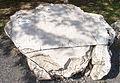 Freshwater limestone, Süttő.jpg