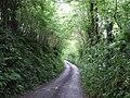 Furzehill Lane - geograph.org.uk - 455241.jpg