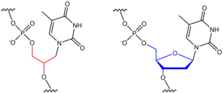 Glycol nucleic acid Polymer similar to DNA