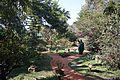 Garden - Agri-Horticultural Society of India - Alipore - Kolkata 2013-02-10 4801.JPG