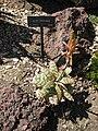 Gardenology.org-IMG 2729 hunt0903.jpg