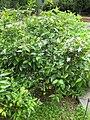 Gardenology.org-IMG 2929 rbgs11jan.jpg