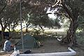 Gavrio, Camping Andros, 090704.jpg