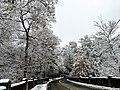 Georgia snow IMG 4466 (38230805754).jpg