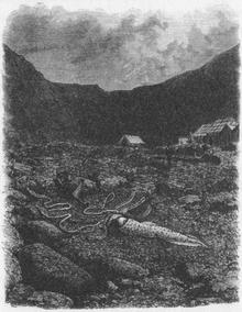 Architeuthis sanctipauli venne descritto nel 1877 a partire da un esemplare arenatosi tre anni prima sull'isola di Saint-Paul