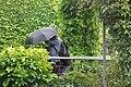 Giverny (105).jpg