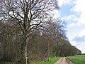 Gransmoor Wood - geograph.org.uk - 154292.jpg