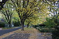 Grant Crescent Griffith ACT April 2014.JPG