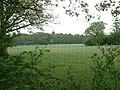 Grazing near Knepp Castle - geograph.org.uk - 233916.jpg