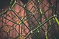 Green rope meshwork (Unsplash).jpg