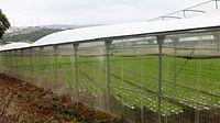 Greenhouse (Loures).jpg