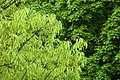 Greens (259216971).jpeg