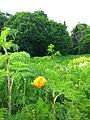 Gryshko Botanical Garden (May 2019) 03.jpg