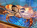 HK Aberdeen Centre Kuen Fat Restaurant seafood Crab Nov-2012.JPG