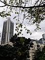 HK ML 半山區 Mid-levels 寶雲道 Bowen Road February 2020 SS2 16.jpg