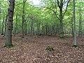 Hambach forest 66.jpg