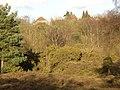 Hambledon Heath - geograph.org.uk - 171767.jpg