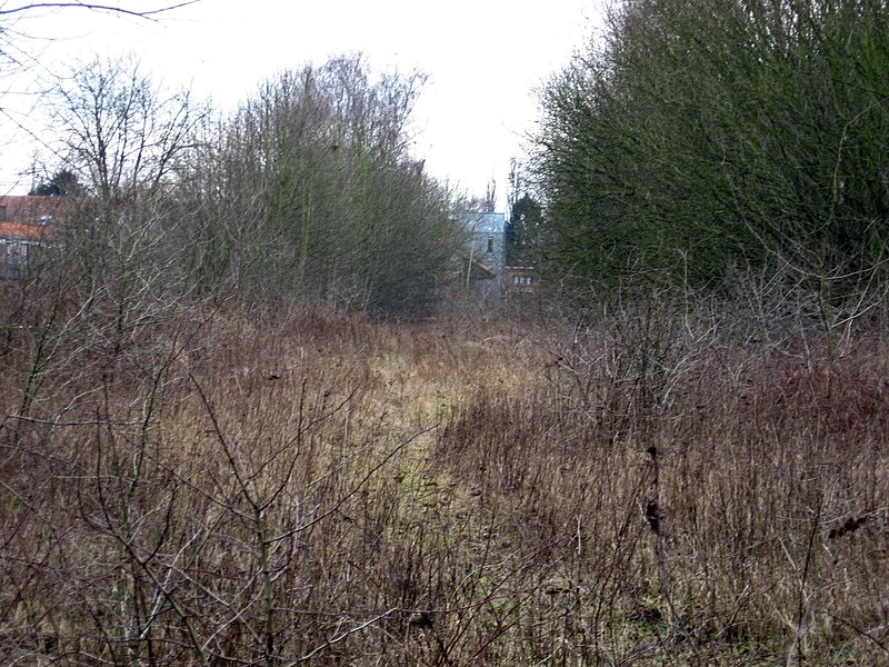 Overgrown ex station yard at Hannut