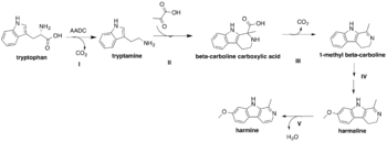 Proposed biosynthesis of harmine from L-tryptophan
