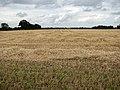 Harvesting the barley - geograph.org.uk - 930248.jpg