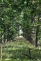 Haseldorfer Graureiherkolonie 06.JPG