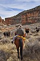 Herding cows out of Snake Gulch (6847218383).jpg