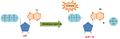 Hidrólisis del ATP por la terminasa mayor.png