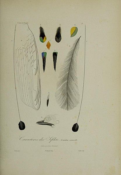 File:Histoire naturelle des oiseaux de paradis et des épimaques (19870029501).jpg