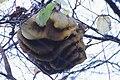 Honeycombs by country Bienenwaben Styria 01.jpg