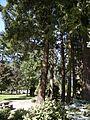 Hope, BC - Hope Memorial Park 02.jpg