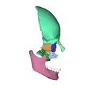 Human skull - lateral view3.png