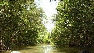 Maranhão mangroves - Igarapé (shallow channel) in Maranhão