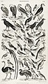 Illustration from A History of the Earth and Animated Nature by Oliver Goldsmith from rawpixel's own original edition of the publication 00031.jpg